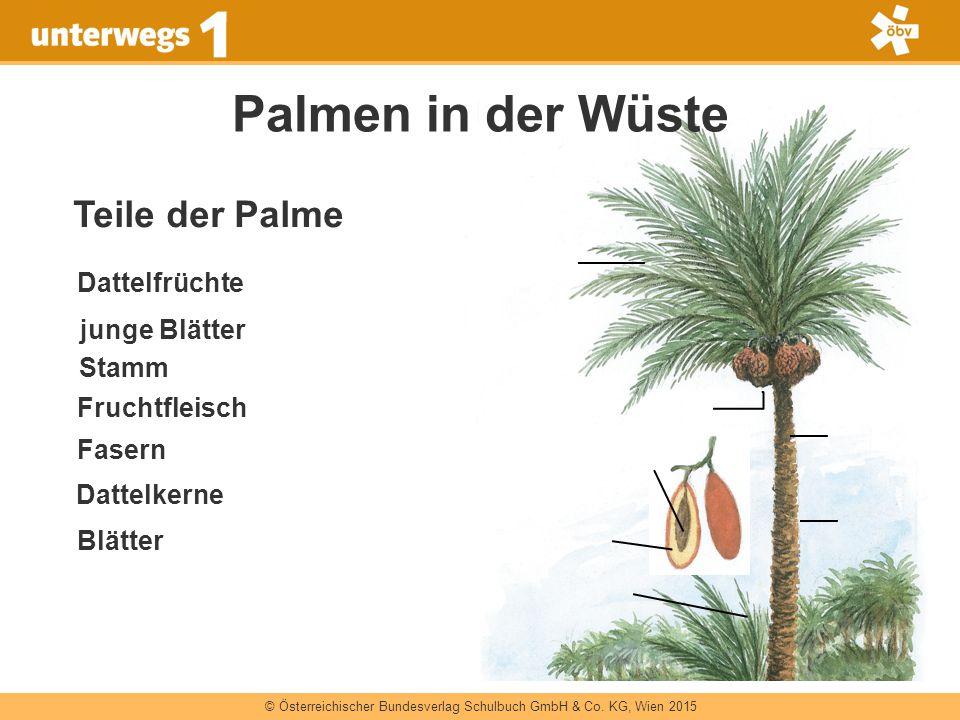 © Österreichischer Bundesverlag Schulbuch GmbH & Co. KG, Wien 2015 Palmen in der Wüste Dattelfrüchte Blätter Dattelkerne Fruchtfleisch Fasern Stamm ju