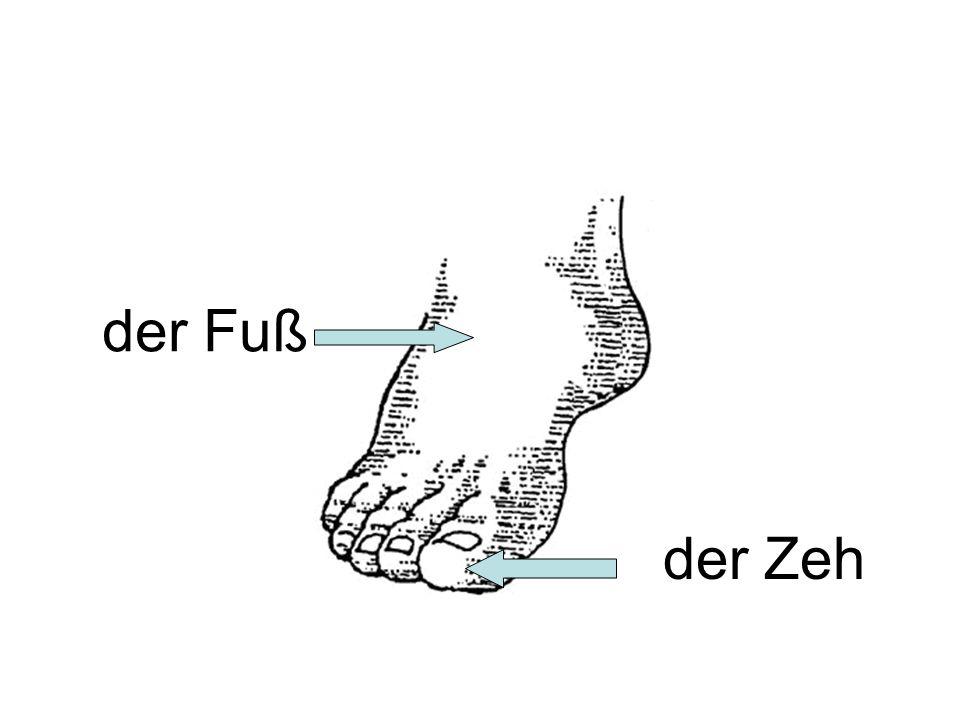 der Fuß der Zeh
