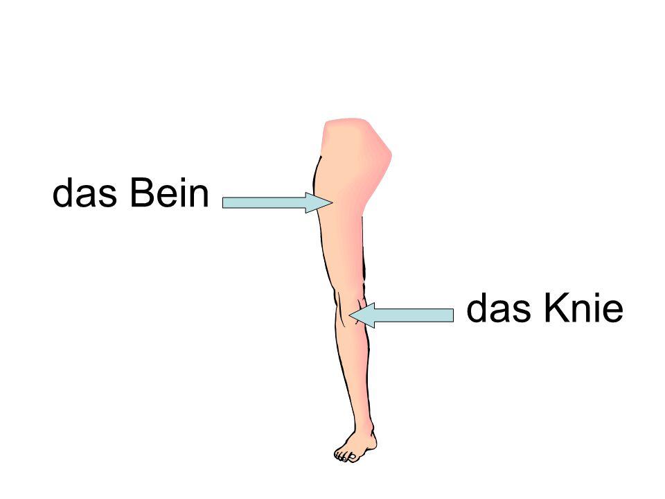 das Bein das Knie