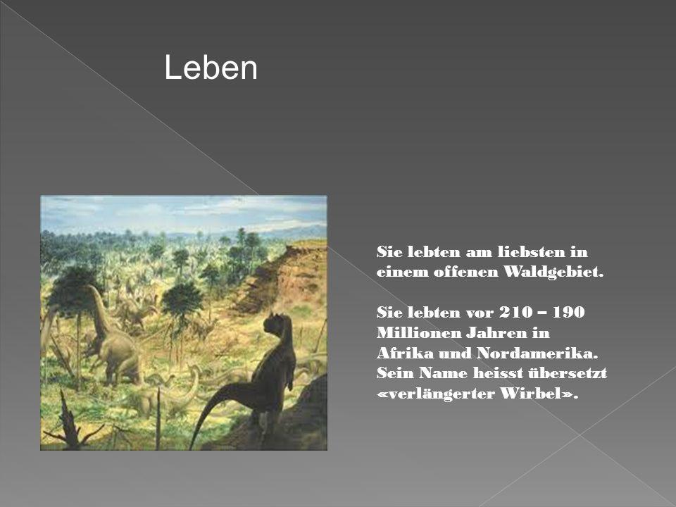 Sie lebten am liebsten in einem offenen Waldgebiet. Sie lebten vor 210 – 190 Millionen Jahren in Afrika und Nordamerika. Sein Name heisst übersetzt «v