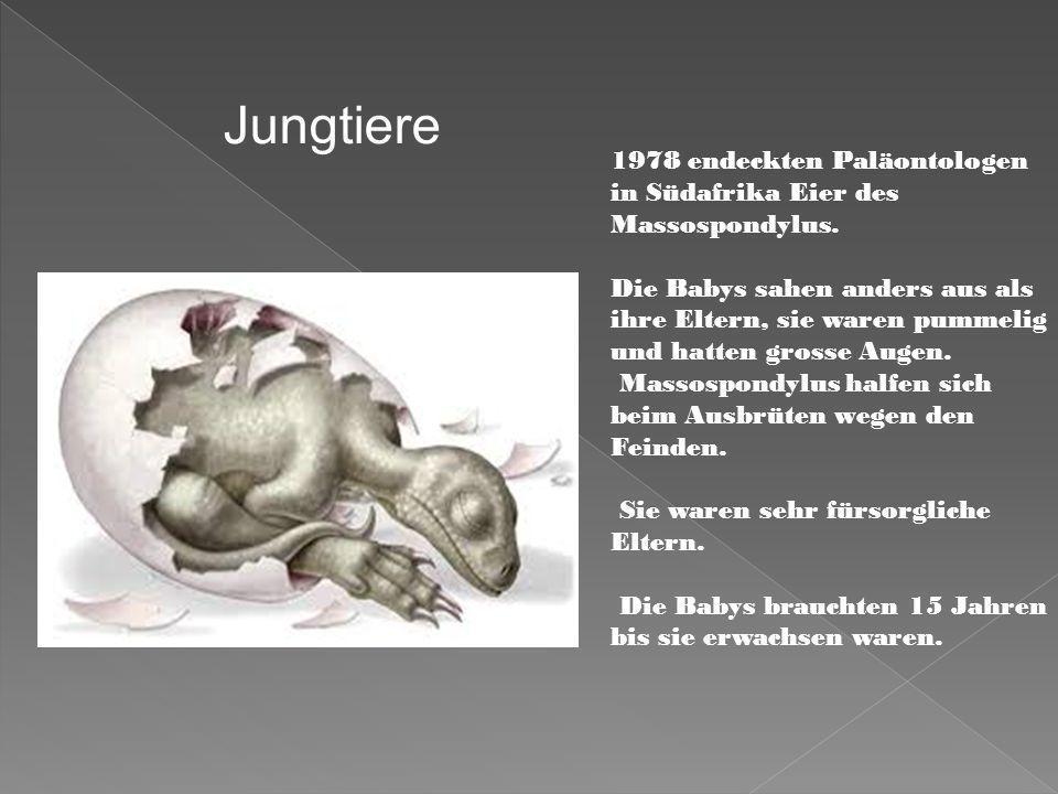 1978 endeckten Paläontologen in Südafrika Eier des Massospondylus. Die Babys sahen anders aus als ihre Eltern, sie waren pummelig und hatten grosse Au