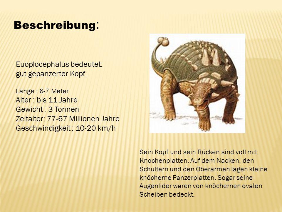 Beschreibung : Euoplocephalus bedeutet: gut gepanzerter Kopf. Länge : 6-7 Meter Alter : bis 11 Jahre Gewicht : 3 Tonnen Zeitalter: 77-67 Millionen Jah