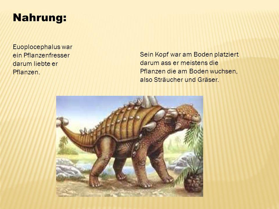 Nahrung: Euoplocephalus war ein Pflanzenfresser darum liebte er Pflanzen. Sein Kopf war am Boden platziert darum ass er meistens die Pflanzen die am B