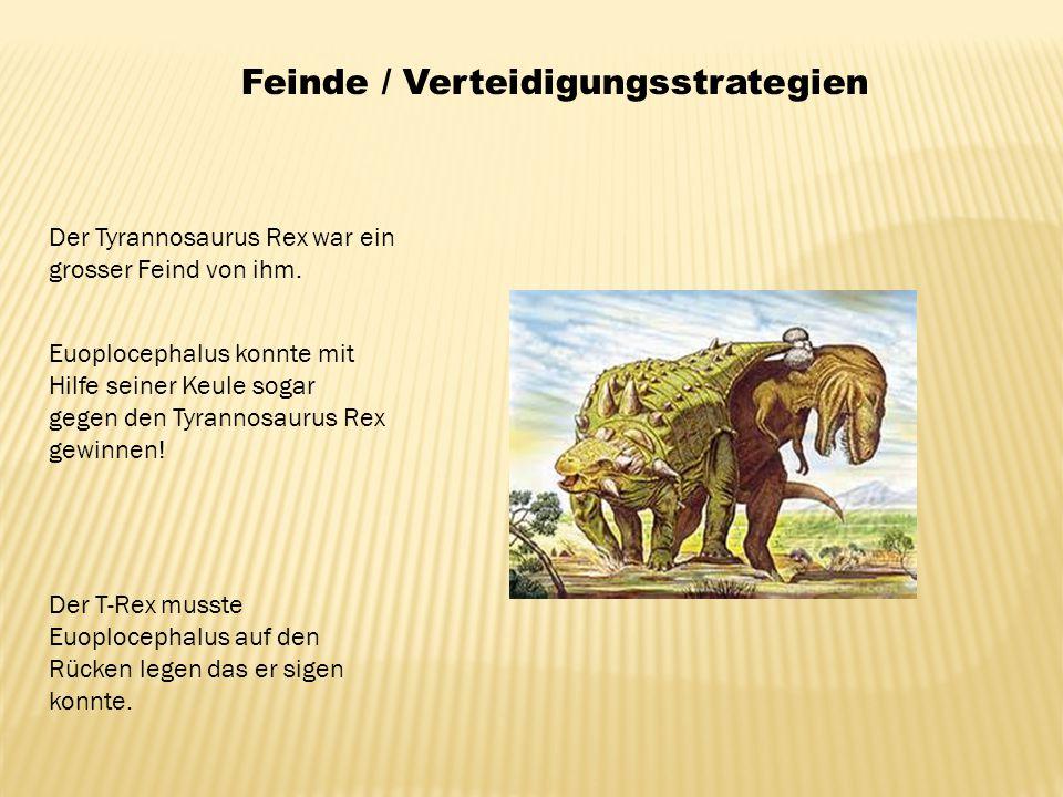 Feinde / Verteidigungsstrategien Der Tyrannosaurus Rex war ein grosser Feind von ihm. Euoplocephalus konnte mit Hilfe seiner Keule sogar gegen den Tyr