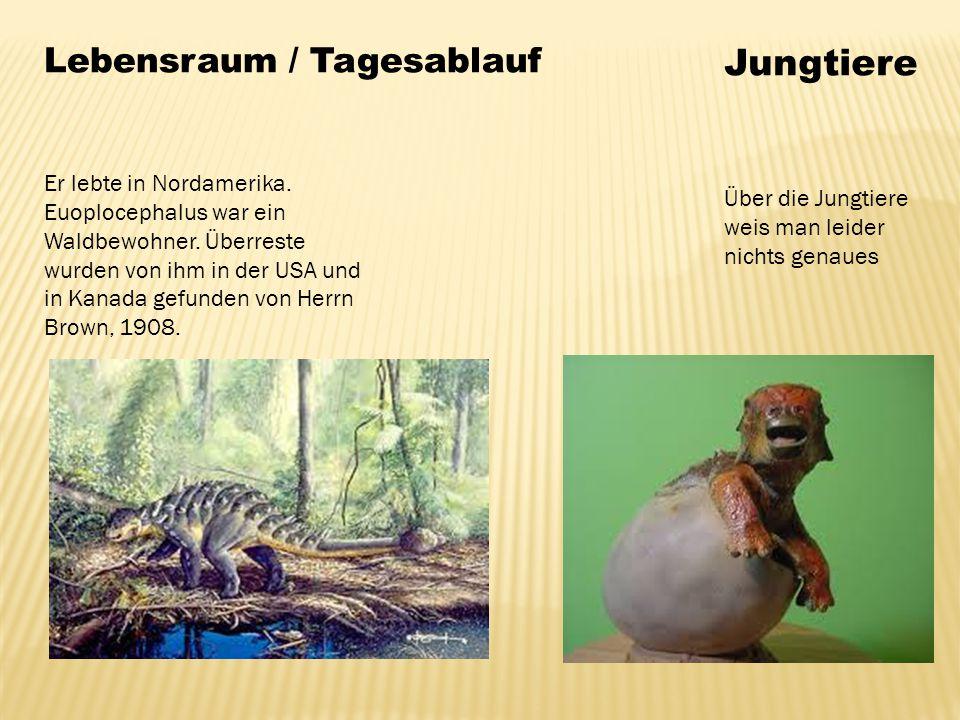 Lebensraum / Tagesablauf Er lebte in Nordamerika. Euoplocephalus war ein Waldbewohner. Überreste wurden von ihm in der USA und in Kanada gefunden von