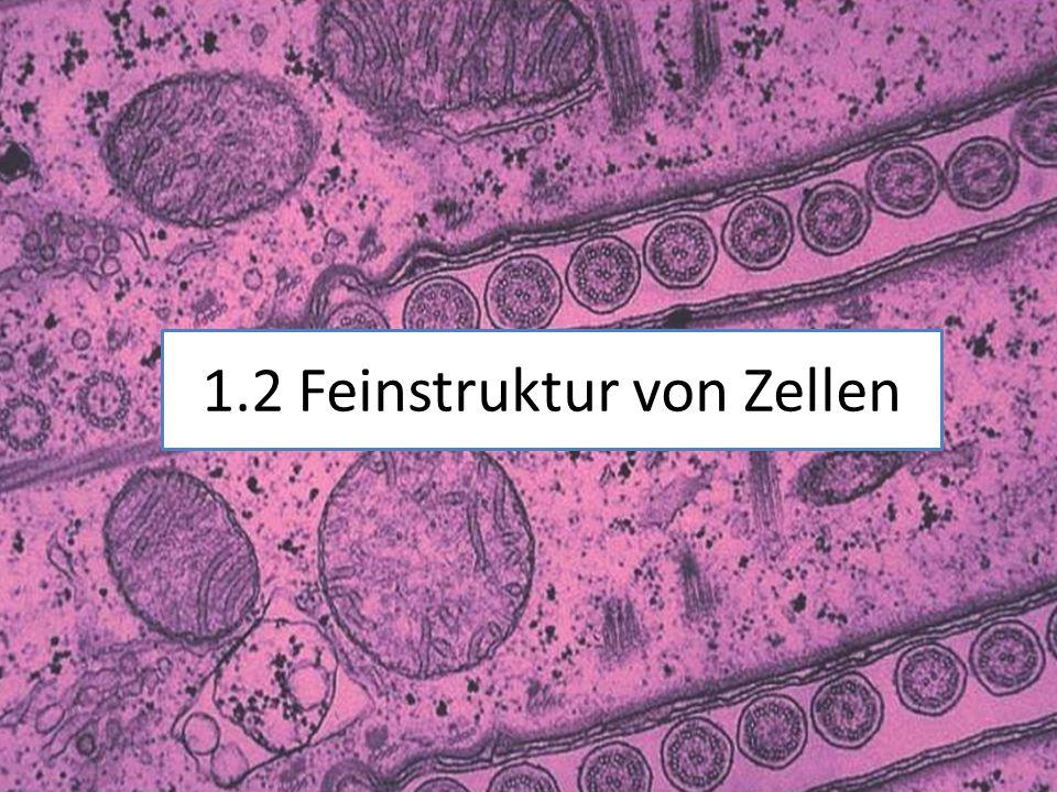 1.2 Feinstruktur von Zellen