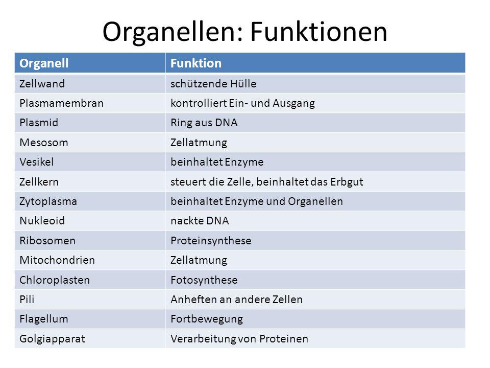 Organellen: Funktionen OrganellFunktion Zellwandschützende Hülle Plasmamembrankontrolliert Ein- und Ausgang PlasmidRing aus DNA MesosomZellatmung Vesi
