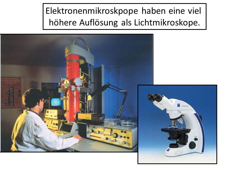 Elektronenmikroskpope haben eine viel höhere Auflösung als Lichtmikroskope.