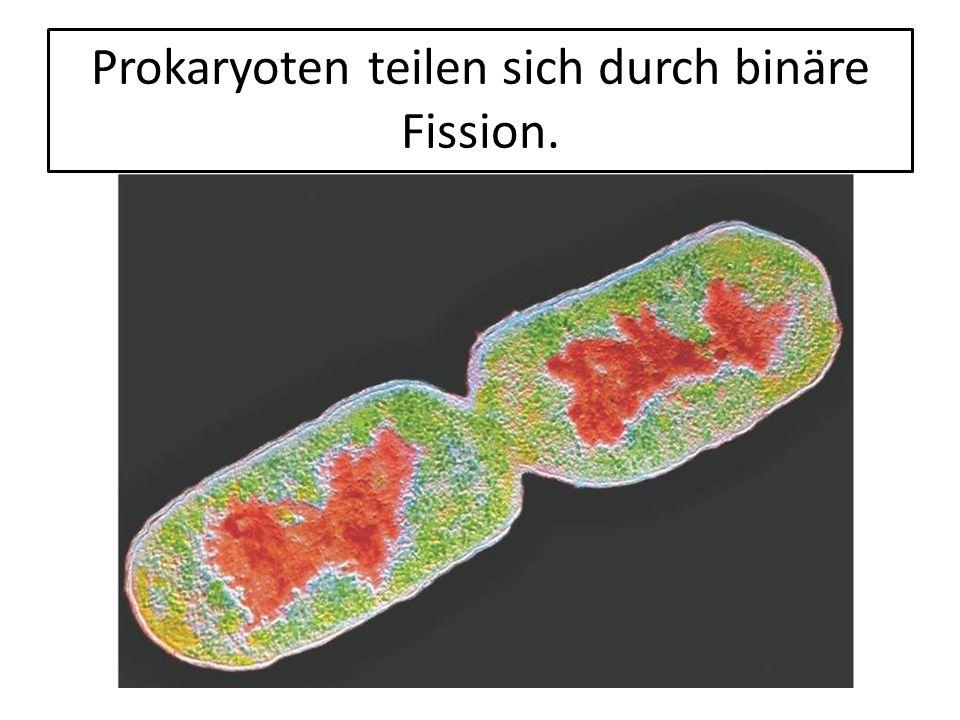 Eukaryotische Zellen sind komplex und kompartimentiert.