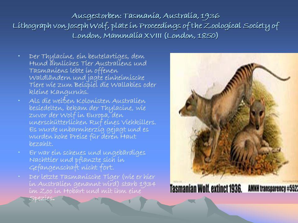 Ausgestorben: Tasmania, Australia, 1936 Lithograph von Joseph Wolf, plate in Proceedings of the Zoological Society of London, Mammalia XVIII (London,