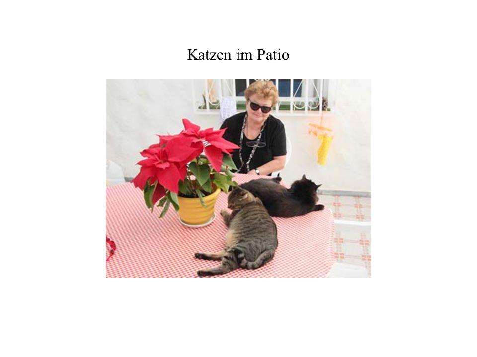Katzen im Patio