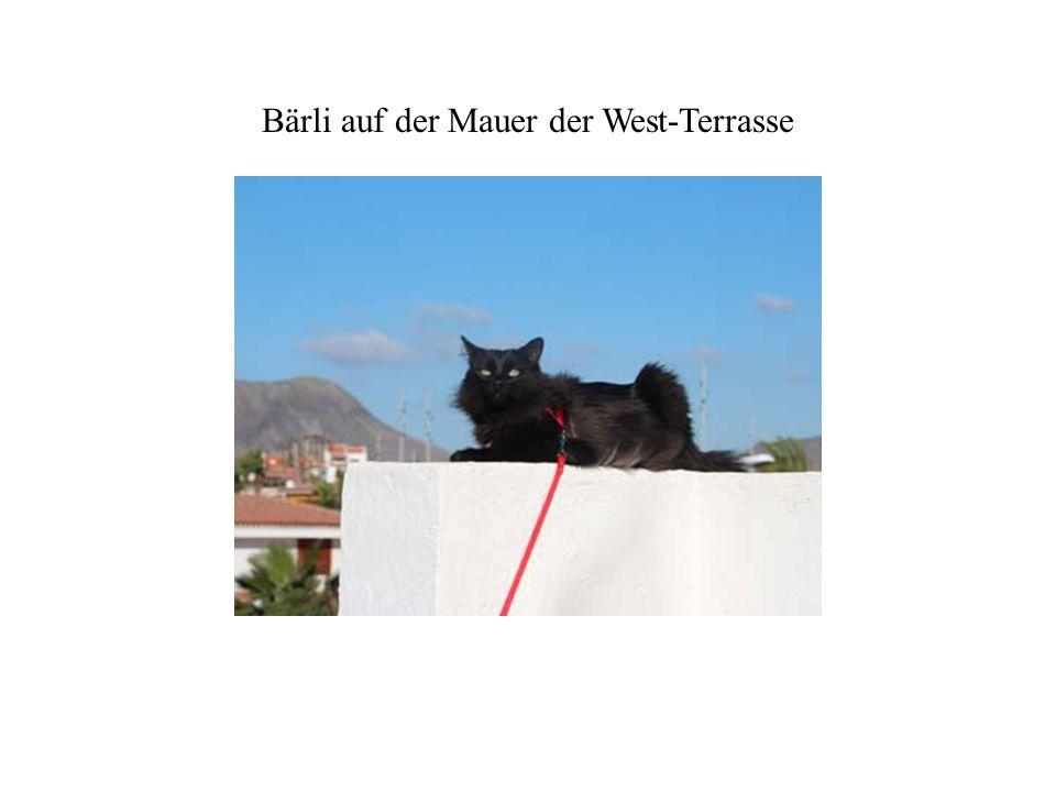 Bärli auf der Mauer der West-Terrasse