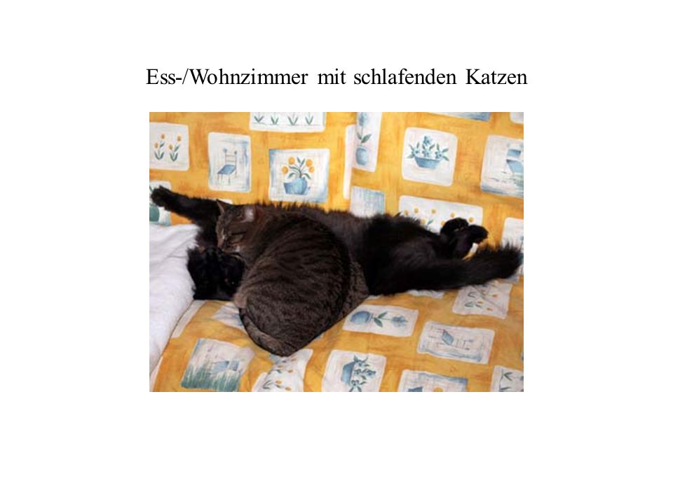 Ess-/Wohnzimmer mit schlafenden Katzen