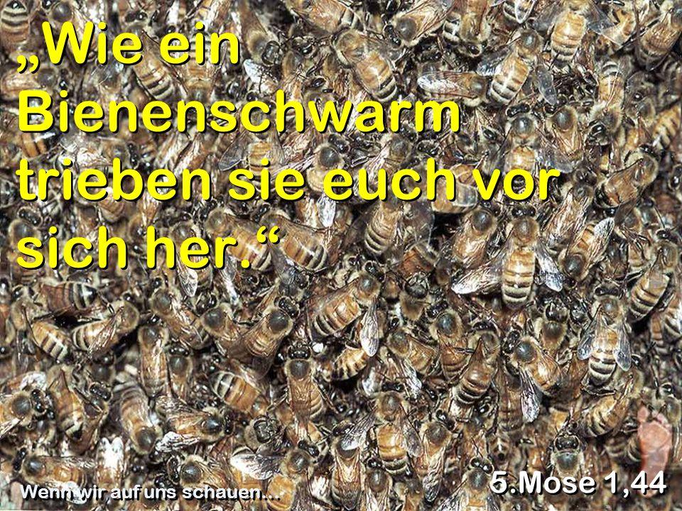 """""""Wie ein Bienenschwarm trieben sie euch vor sich her."""" 5.Mose 1,44 Wenn wir auf uns schauen…"""