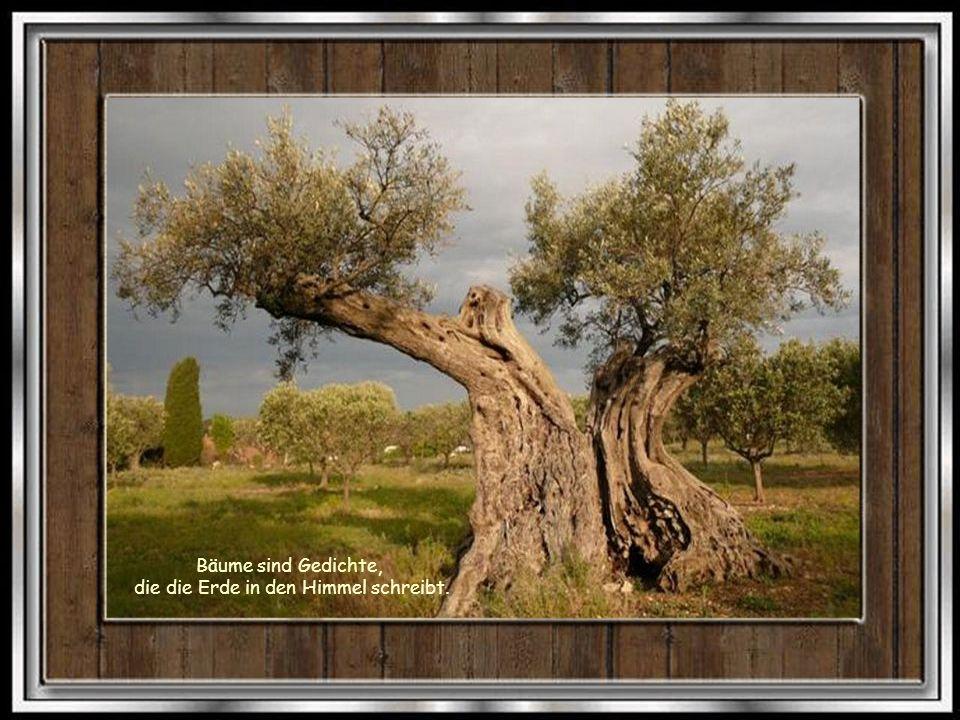 Planst Du ein Jahr, so säe Korn. Planst Du ein Jahrtausend, so pflanze Bäume.