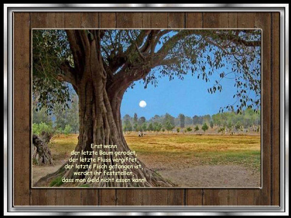 Bäume sind Gedichte, die die Erde in den Himmel schreibt.