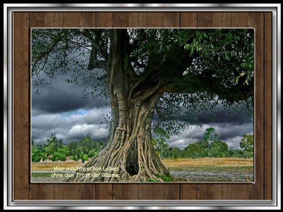 Erst wenn der letzte Baum gerodet, der letzte Fluss vergiftet, der letzte Fisch gefangen ist, werdet ihr feststellen, dass man Geld nicht essen kann!