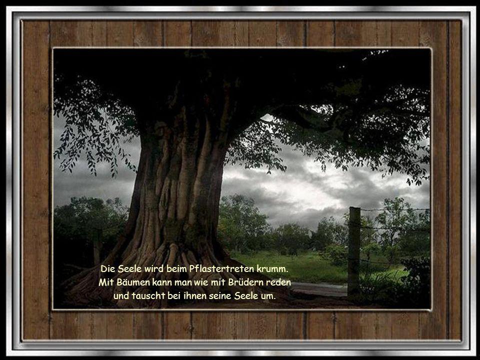 Habt Ehrfurcht vor dem Baum. Er ist ein einziges Wunder.
