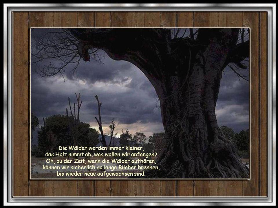 Bäume sind Heiligtümer. Wer ihnen zuzuhören weiss, der erfährt die Wahrheit.