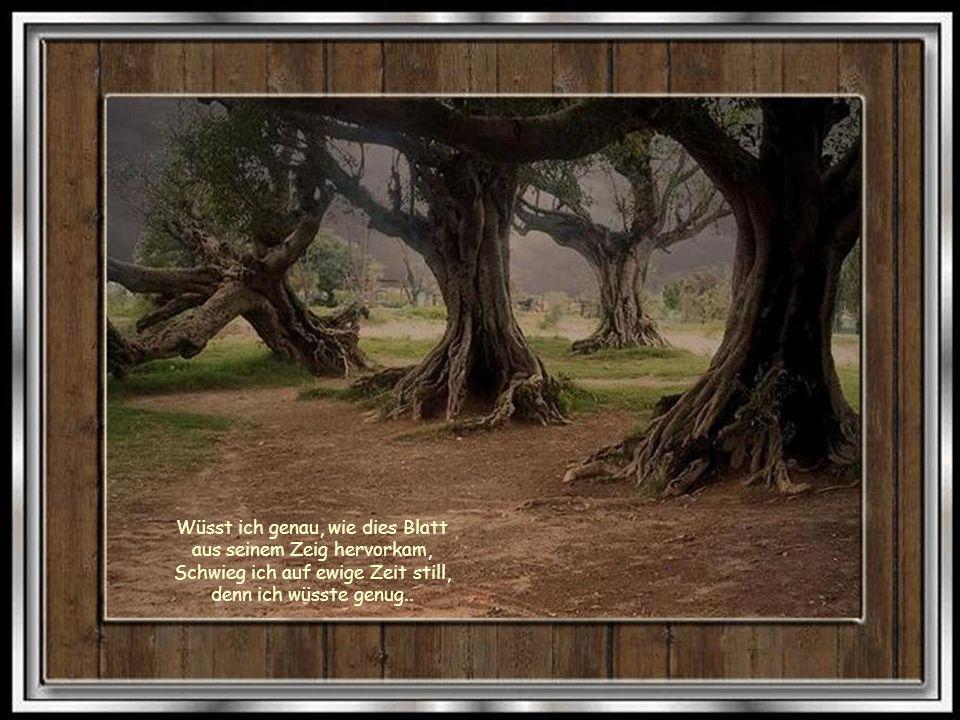 Die Wälder werden immer kleiner, das Holz nimmt ab, was wollen wir anfangen.