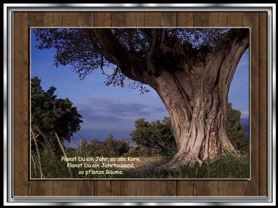 Wenn Deine Seele krank ist, dann verbirg Dich wie ein verwundetes Tier in den Wäldern: Sie werden Dich heilen.