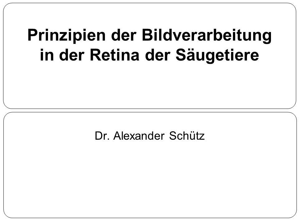Prinzipien der Bildverarbeitung in der Retina der Säugetiere Dr. Alexander Schütz