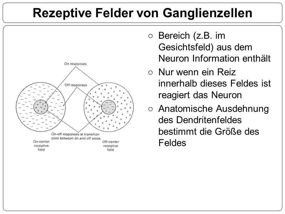 Rezeptive Felder von Ganglienzellen ○Bereich (z.B. im Gesichtsfeld) aus dem Neuron Information enthält ○Nur wenn ein Reiz innerhalb dieses Feldes ist