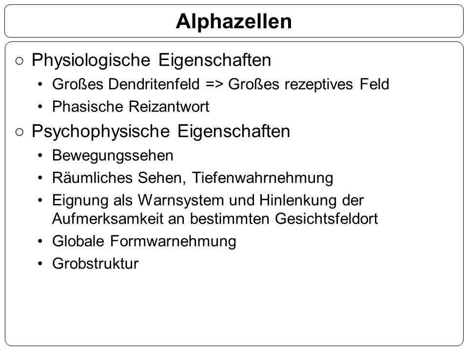 Alphazellen ○Physiologische Eigenschaften Großes Dendritenfeld => Großes rezeptives Feld Phasische Reizantwort ○Psychophysische Eigenschaften Bewegung