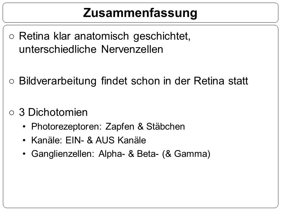 Zusammenfassung ○Retina klar anatomisch geschichtet, unterschiedliche Nervenzellen ○Bildverarbeitung findet schon in der Retina statt ○3 Dichotomien P