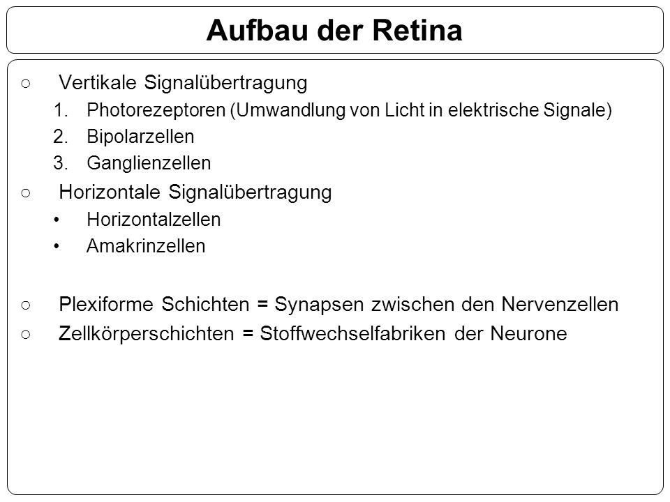 ○Vertikale Signalübertragung 1.Photorezeptoren (Umwandlung von Licht in elektrische Signale) 2.Bipolarzellen 3.Ganglienzellen ○Horizontale Signalübert