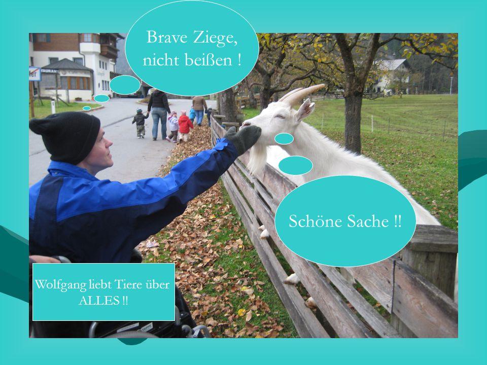 Brave Ziege, nicht beißen ! Schöne Sache !! Wolfgang liebt Tiere über ALLES !!