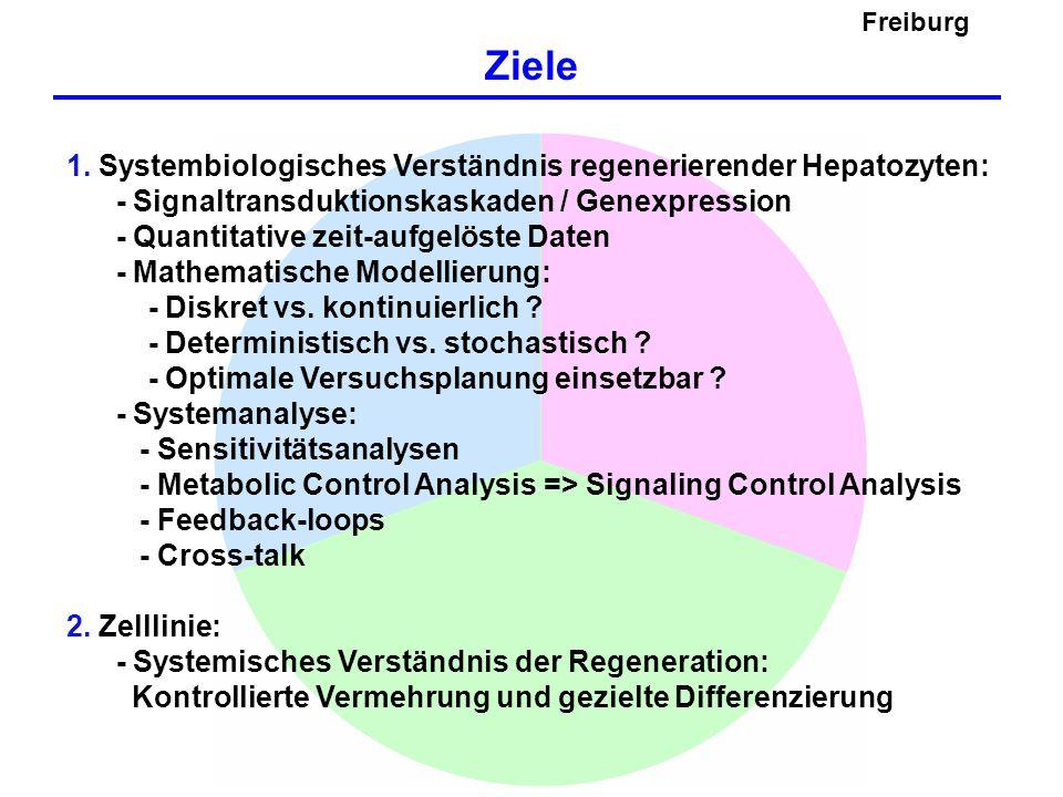 Freiburg Verbundstruktur A.SOPs Isolierung/Kultivierung primärer Hepatozyten B.