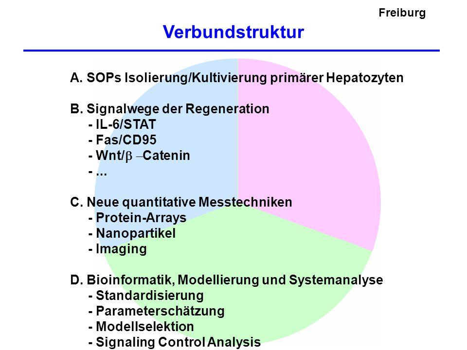 Freiburg Geplantes Vorgehen - Modellierung der einzelnen Module - Stimulusabhängige Dosis-Wirkungs-Kurven - Dynamische Interaktionen der Module - Test von Modellvorhersagen - Zeitabhängiges Verhalten im Verlauf der Regulation