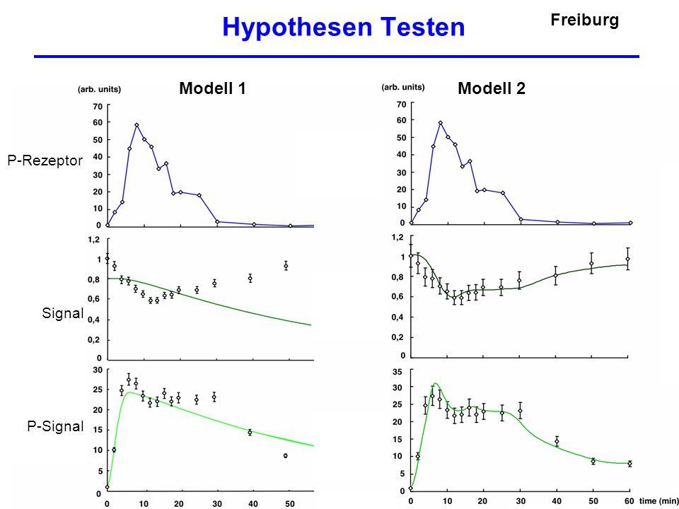 """Kommunikationsbedarf Biochemiker: - Hepatozytenspezifisches - """"Gefühl für Modelle - Dynamische Regulationsmechanismen - Experimentelle Versuchsplanung Messtechniker: - Was ist messbar ."""