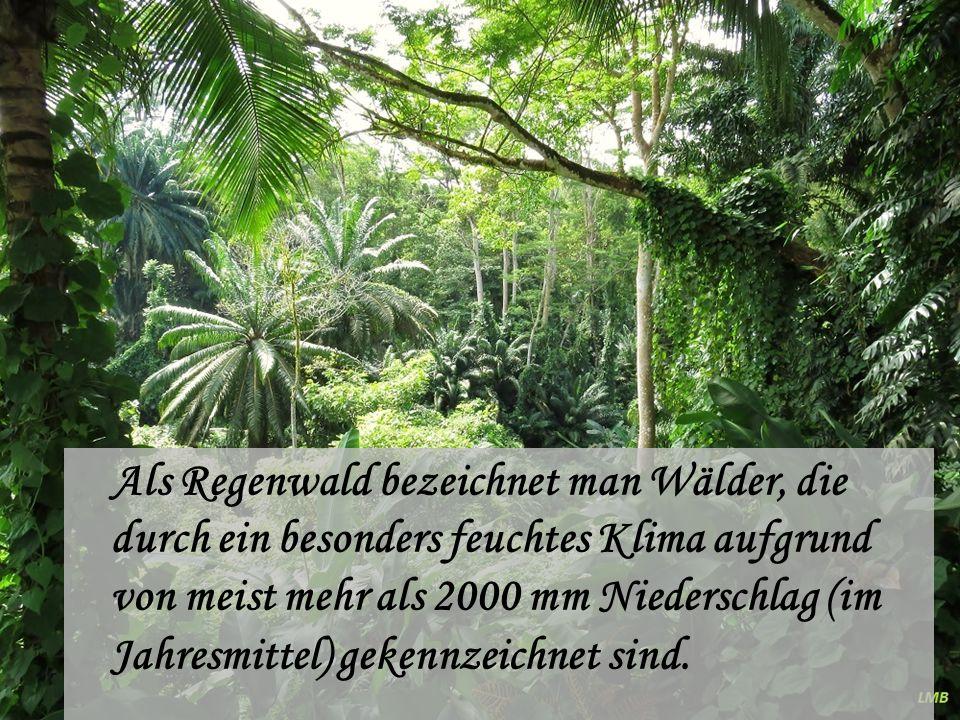 Tropischer Regenwald Der Begriff tropischer Regenwald kennzeichnet ein Ökosystem, das eine Vielzahl an Wald-Typen umfasst: zum einen den Tiefland-Regenwald bis etwa 800 m Höhe, zum anderen den Berg-Regenwald bis etwa 1500 m Höhe und schließlich dem Nebelwald jenseits von 2000 m Höhe.