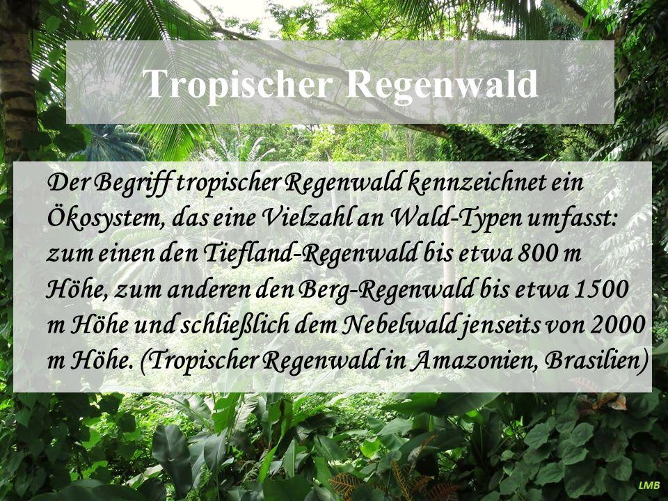 Tropischer Regenwald Der Begriff tropischer Regenwald kennzeichnet ein Ökosystem, das eine Vielzahl an Wald-Typen umfasst: zum einen den Tiefland-Rege