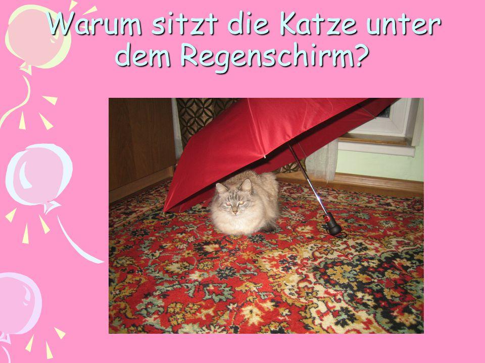 Warum sitzt die Katze unter dem Regenschirm?