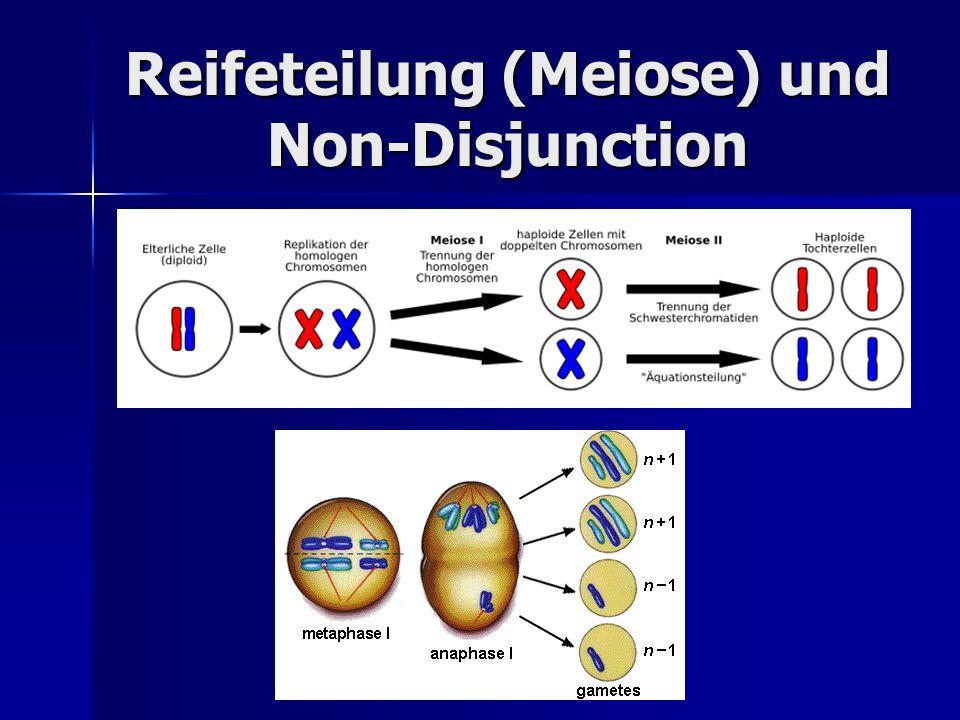 Reifeteilung (Meiose) und Non-Disjunction