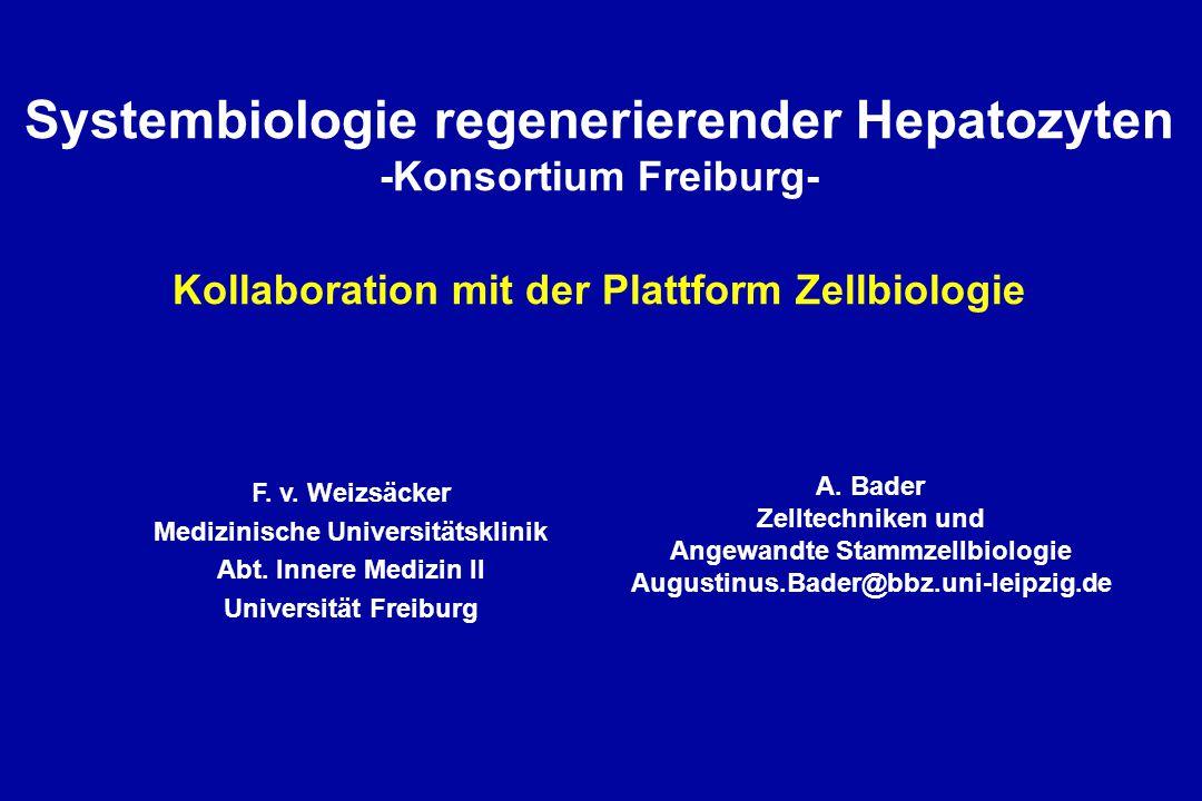 System 1: differenzierter Hepatozyt Metabolismus, Detoxifikation