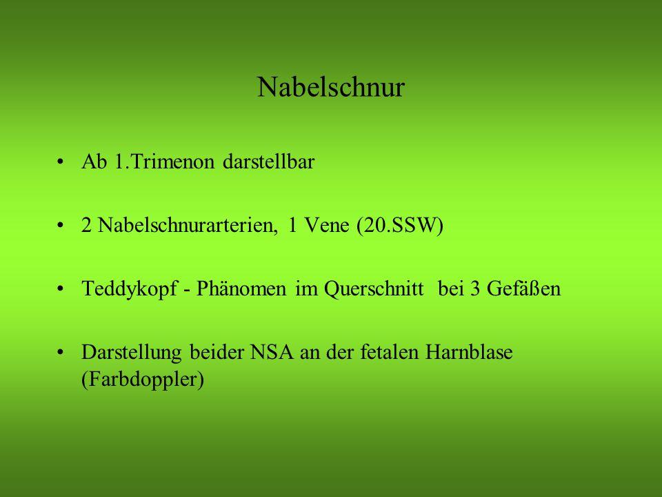 Nabelschnur Ab 1.Trimenon darstellbar 2 Nabelschnurarterien, 1 Vene (20.SSW) Teddykopf - Phänomen im Querschnitt bei 3 Gefäßen Darstellung beider NSA an der fetalen Harnblase (Farbdoppler)