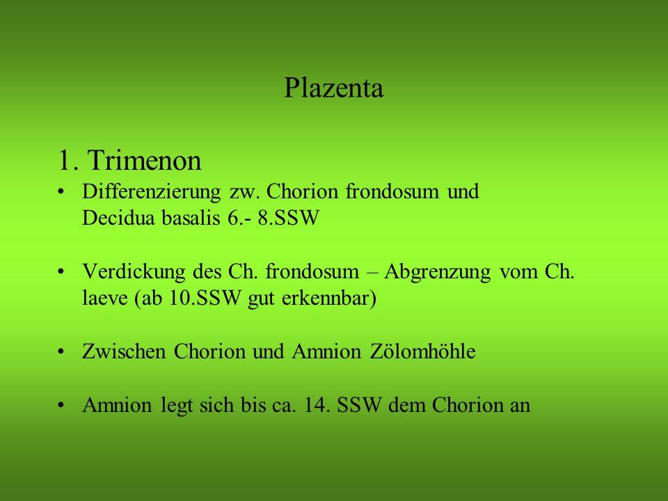 Plazenta 1.Trimenon Differenzierung zw.