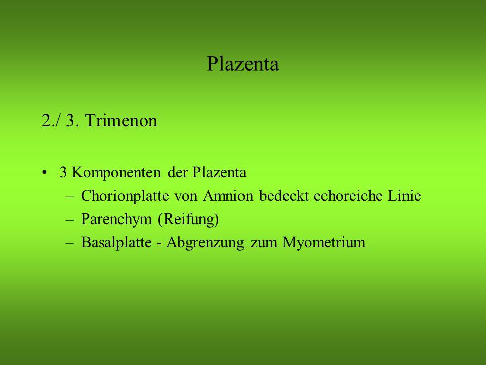 Plazenta 2./ 3.
