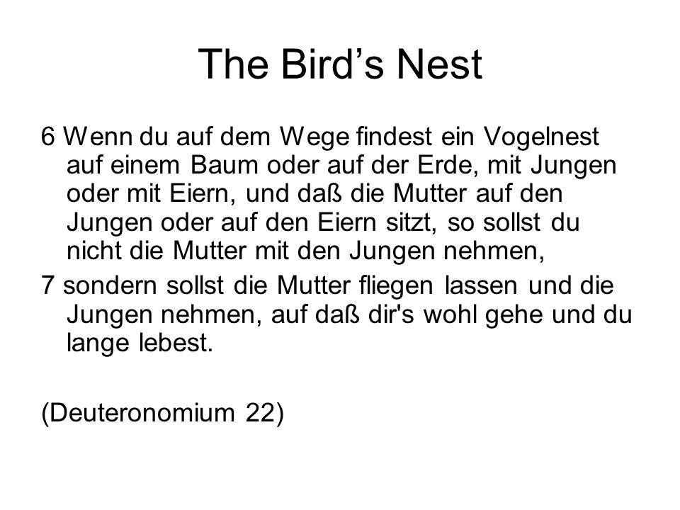 The Bird's Nest 6 Wenn du auf dem Wege findest ein Vogelnest auf einem Baum oder auf der Erde, mit Jungen oder mit Eiern, und daß die Mutter auf den Jungen oder auf den Eiern sitzt, so sollst du nicht die Mutter mit den Jungen nehmen, 7 sondern sollst die Mutter fliegen lassen und die Jungen nehmen, auf daß dir s wohl gehe und du lange lebest.