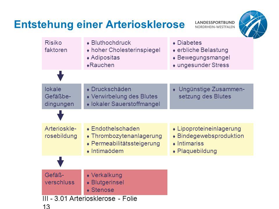 III - 3.01 Arteriosklerose - Folie 13 Entstehung einer Arteriosklerose  Bluthochdruck  hoher Cholesterinspiegel  Adipositas  Rauchen  Druckschäde