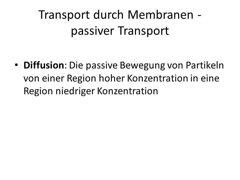 Transport durch Membranen - passiver Transport Diffusion: Die passive Bewegung von Partikeln von einer Region hoher Konzentration in eine Region niedr