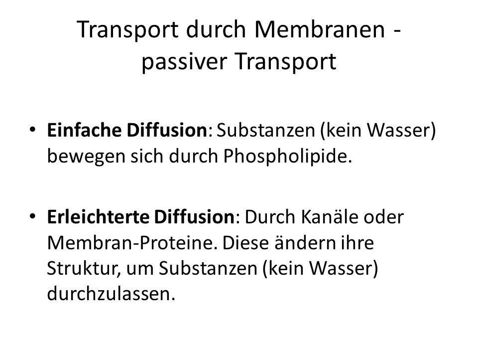 Transport durch Membranen - passiver Transport Einfache Diffusion: Substanzen (kein Wasser) bewegen sich durch Phospholipide. Erleichterte Diffusion: