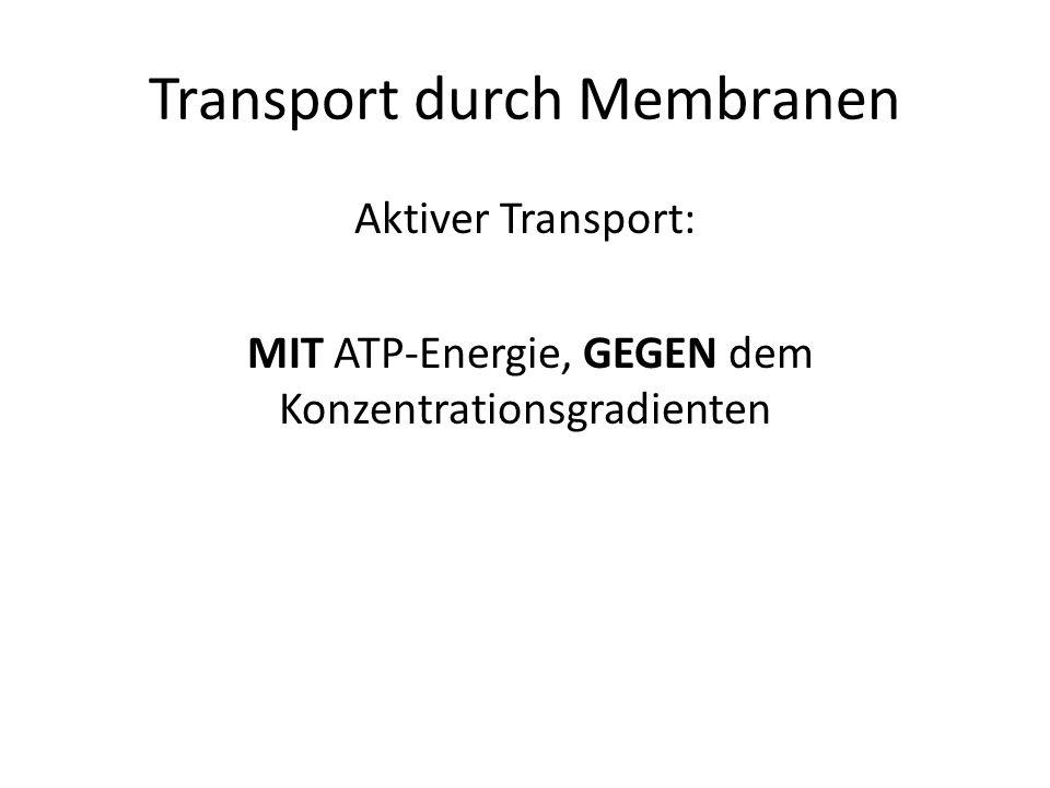 Transport durch Membranen Aktiver Transport: MIT ATP-Energie, GEGEN dem Konzentrationsgradienten