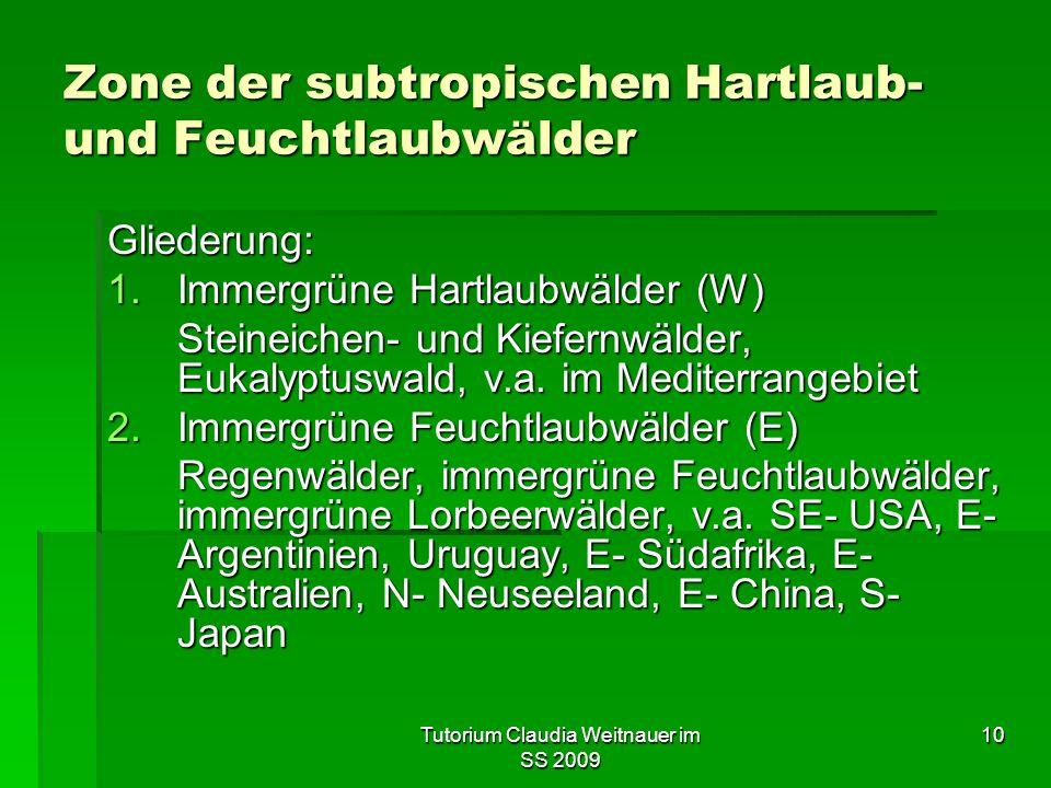 Tutorium Claudia Weitnauer im SS 2009 10 Zone der subtropischen Hartlaub- und Feuchtlaubwälder Gliederung: 1.Immergrüne Hartlaubwälder (W) Steineichen- und Kiefernwälder, Eukalyptuswald, v.a.