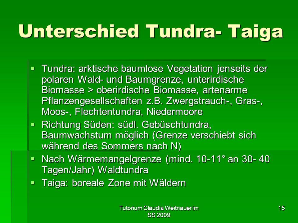 Tutorium Claudia Weitnauer im SS 2009 15 Unterschied Tundra- Taiga  Tundra: arktische baumlose Vegetation jenseits der polaren Wald- und Baumgrenze, unterirdische Biomasse > oberirdische Biomasse, artenarme Pflanzengesellschaften z.B.
