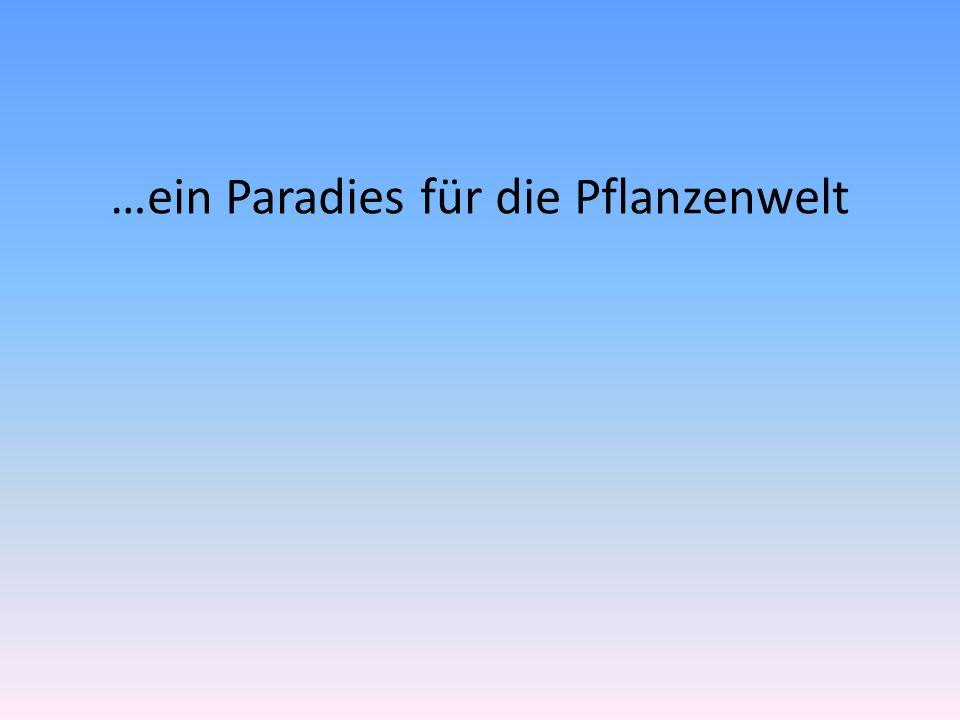…ein Paradies für die Pflanzenwelt
